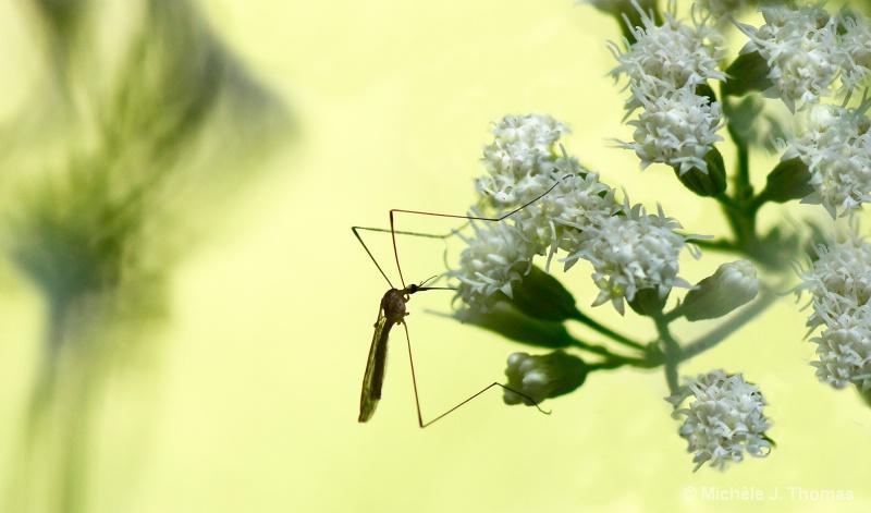 I Hate Mosquito Bites ! - ID: 14705567 © Michèle J. Thomas