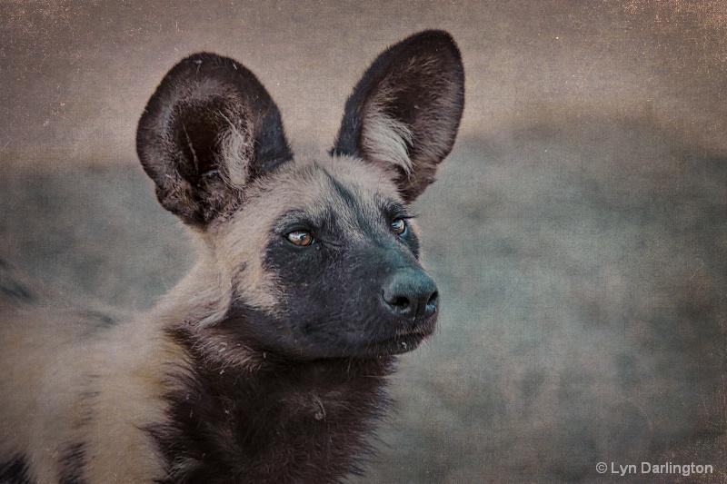 Wild Dog.