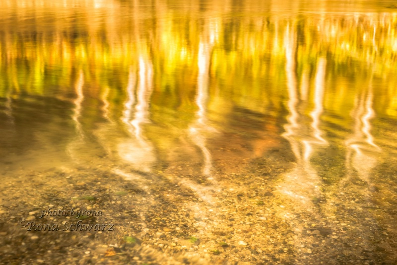 Walnut Creek Reflections