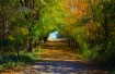 ~ COUNTRY LANE ~
