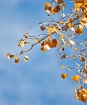 Autumn Oro