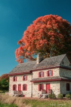 Stone House and Tree 233