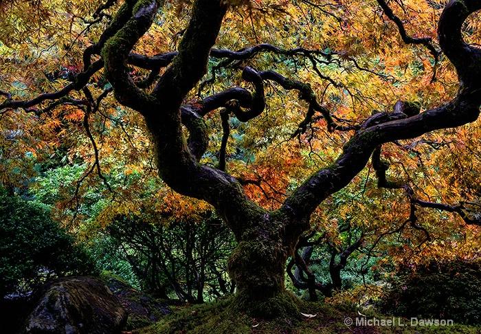 Autumn's Canopy