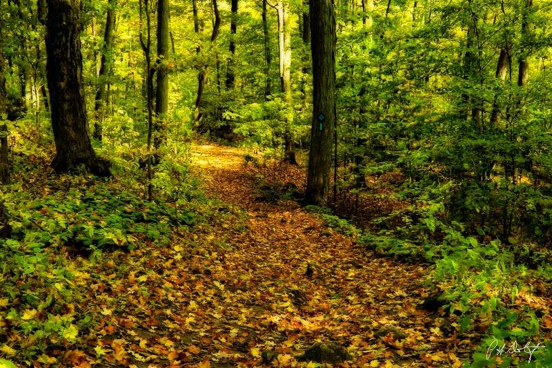 An Orton Autumn