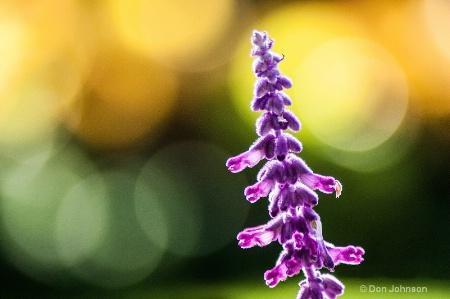 Purple Flower with Bokeh 038