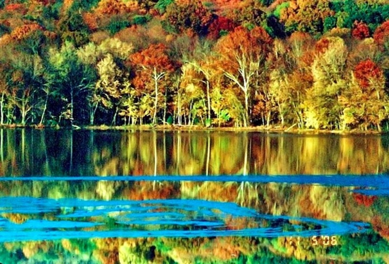 Fall Color at Radnor Lake