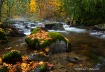 Autumn, Stream