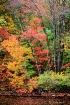 Autumn Color Burs...