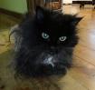 RIP Kitty Coal