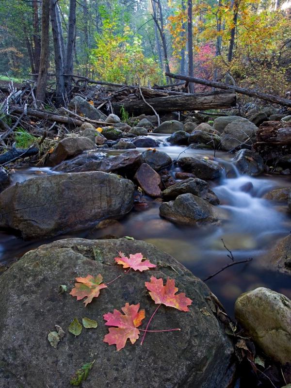 Autumn Color along the Creek