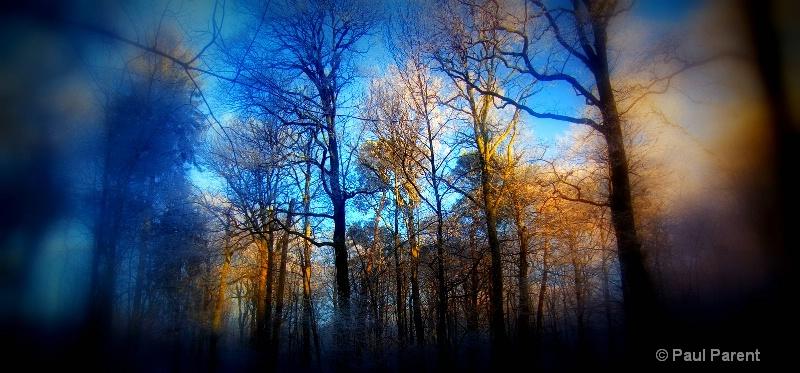 The Blue Forest - ID: 14753475 © paul parent