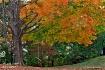 Fall tree swing