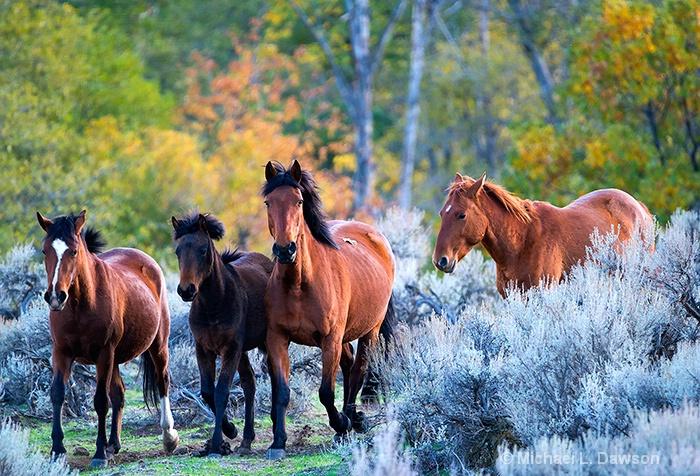 Wild Mustang Autumn