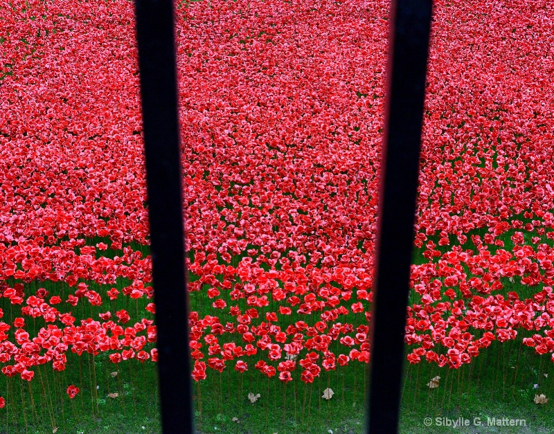 a sea of poppies - ID: 14756973 © Sibylle G. Mattern