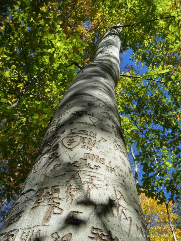 Talking Tree - ID: 14759154 © Amy G. McMillan