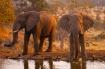 Elephants at wate...