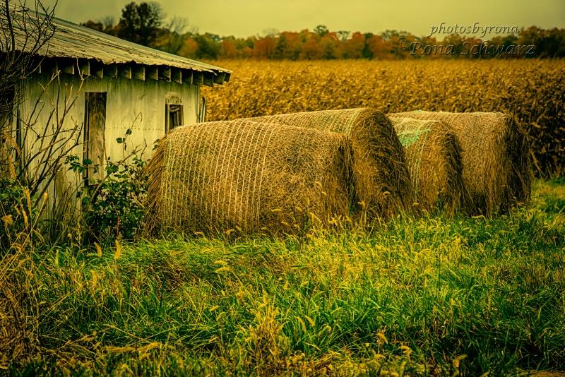 Indiana Harvest