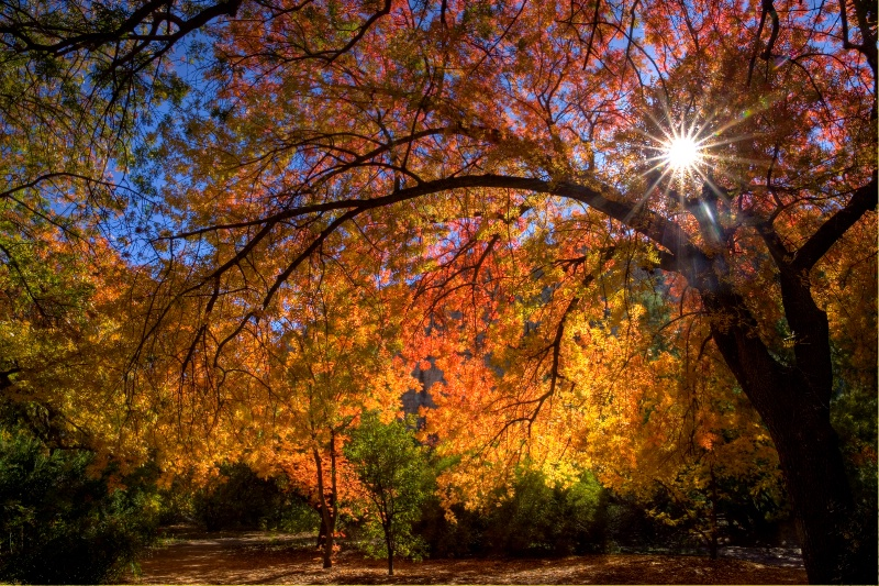 Surrounded by Autumn's Color