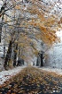 winter and autumn...