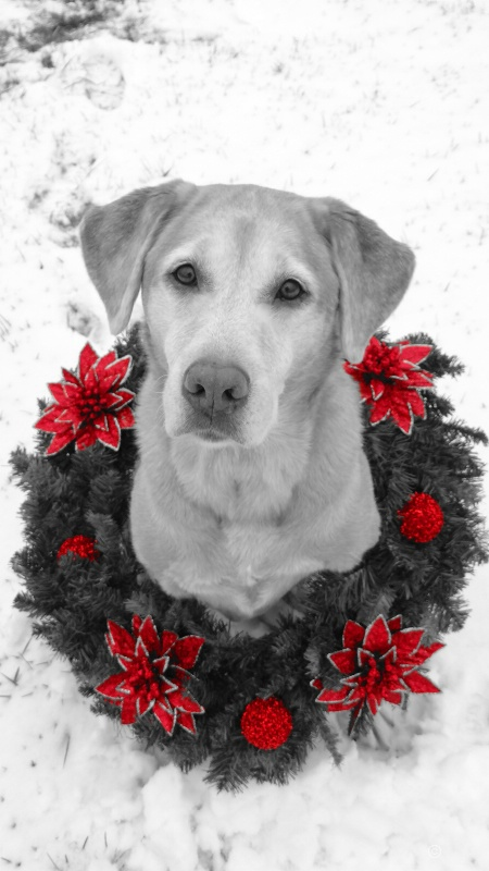 meggie christmas picture