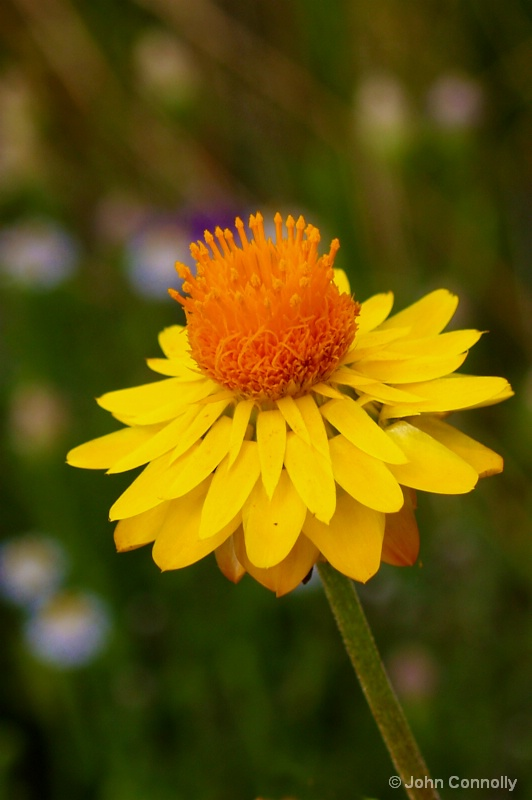 A bush flower.