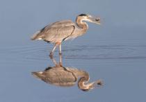 Mirrored Catch