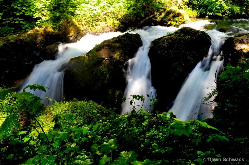 Sol Duc Falls - ID: 14797495 © Dawn Schwack