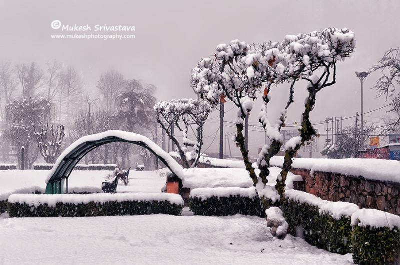 Snow Fall At Srinagar-3