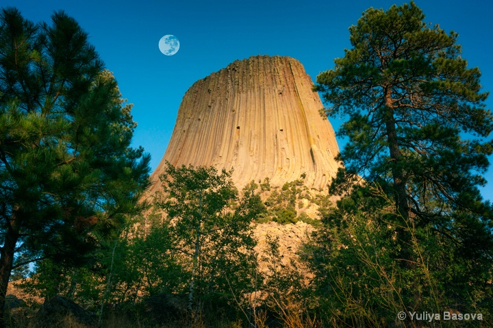 Devils Tower National Monument, Wyoming<p> - ID: 14800524 © Yulia Basova