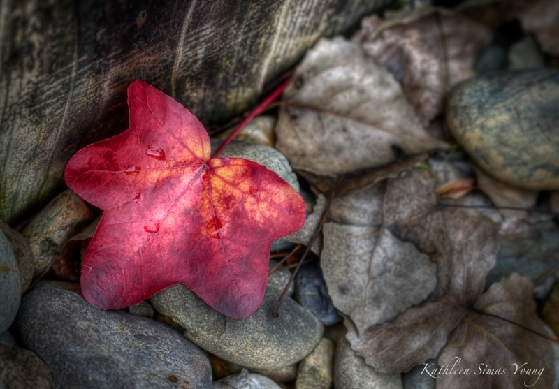 Fall's Final Blush