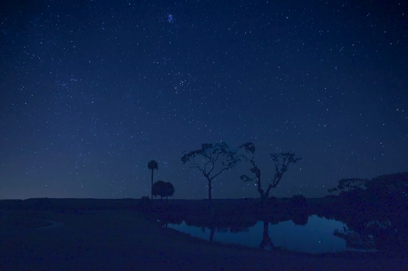 Lowcountry Geminid Meteor Shower