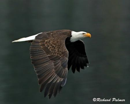 Eagle 9979