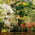 2Spring at Magnolia Gardens - ID: 14810605 © Carol Eade