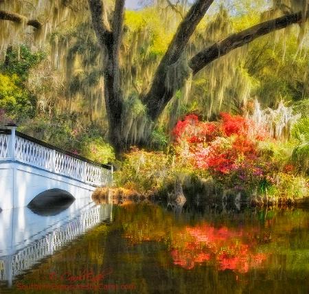 Magnolia Gardens Bridge