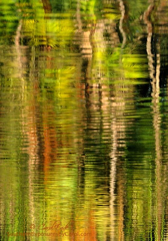 Tropical Impressions - ID: 14811403 © Carol Eade