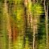 2Tropical Impressions - ID: 14811403 © Carol Eade