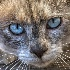 © Beth OMeara PhotoID# 14811856: Blue Eyes