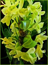 Chartreuse Hues
