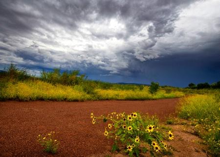 Sedona Wetlands