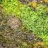 2cedars on spahats creek canyon -    larry citra - ID: 14814508 © Larry J. Citra