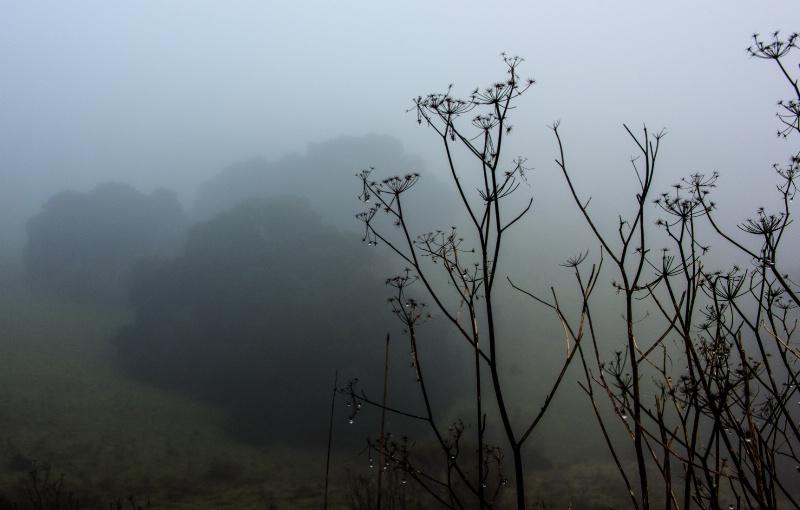 Point Reyes Fog III