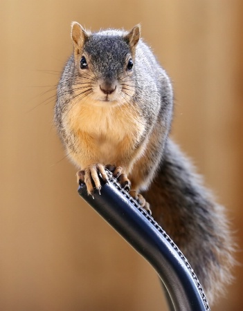 Hand Over the Peanuts...