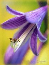 Unknown Glory Flower