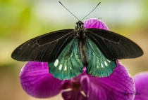 Butterfly Resting on Orchid