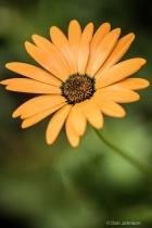 Orange Flower 052
