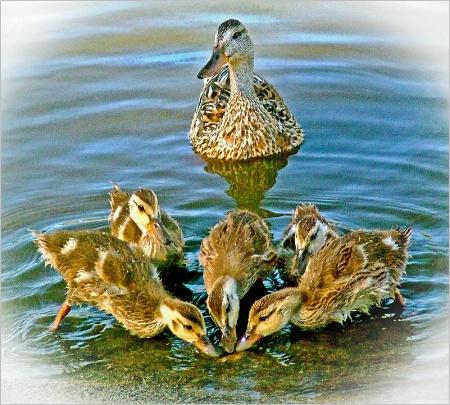 Guarding Her Flock