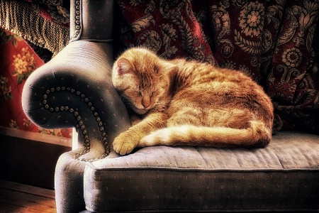 Let Sleeping Cats Lie...