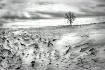 Windswept Winter