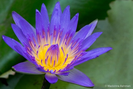 Water Lilly Wonders!!