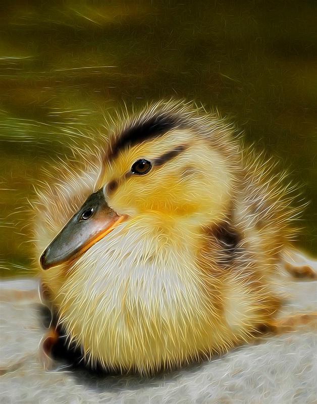 Fuzzy Ducky